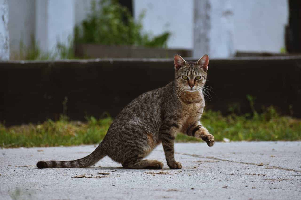 How Much Does It Cost To Take A Stray Cat To The Vet