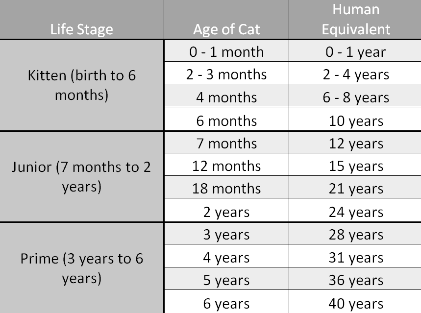 tabby cat life stage