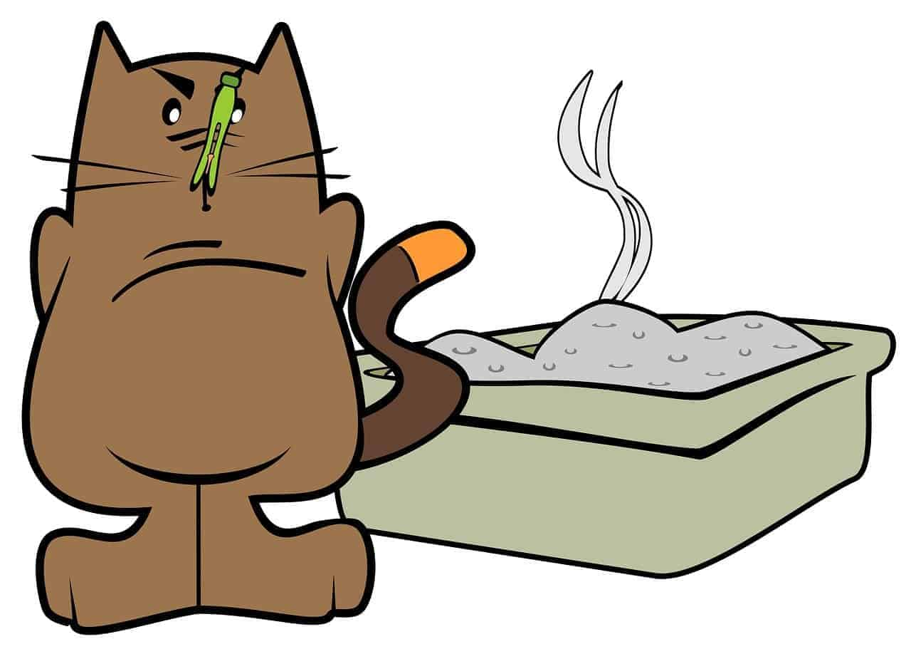 how to stop cat from eating litter