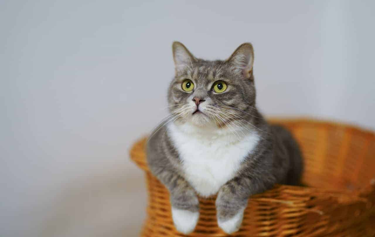 how often should you change cat scratching post