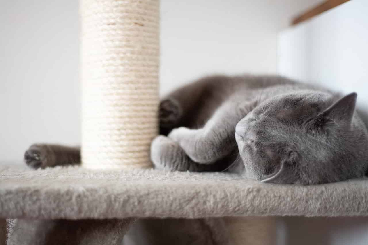 how to re carpet a cat tree