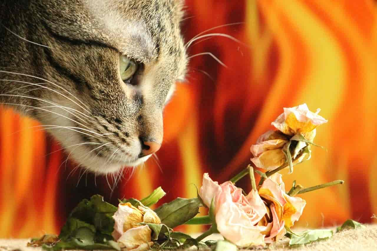 what smells do cats hate