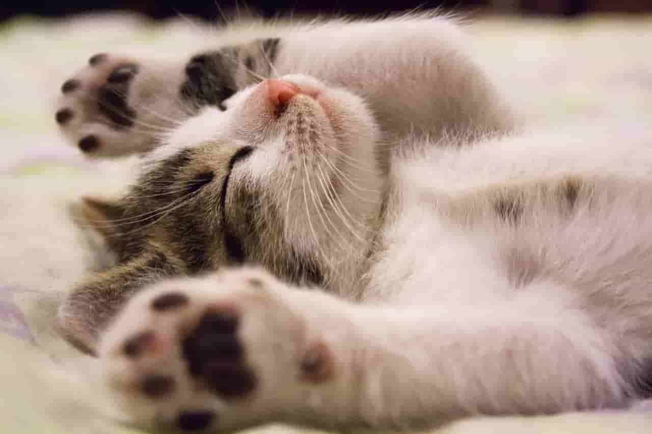 do cats prefer to die alone