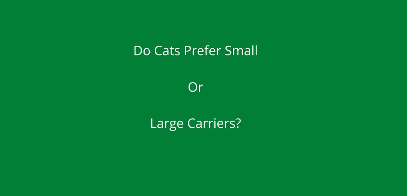 Do Cats Prefer Small Or Large Carriers? Here's The Answer