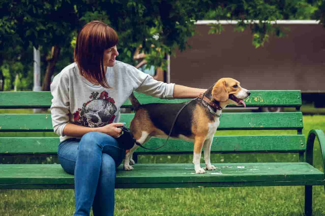 How Do I Know If My Beagle Loves Me