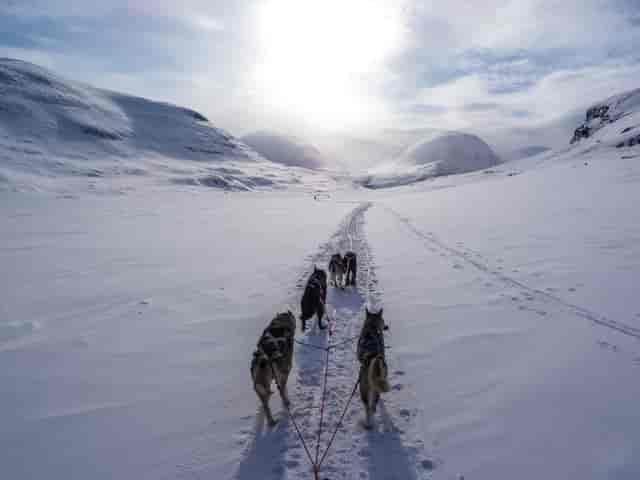 Why Does Husky Run Away